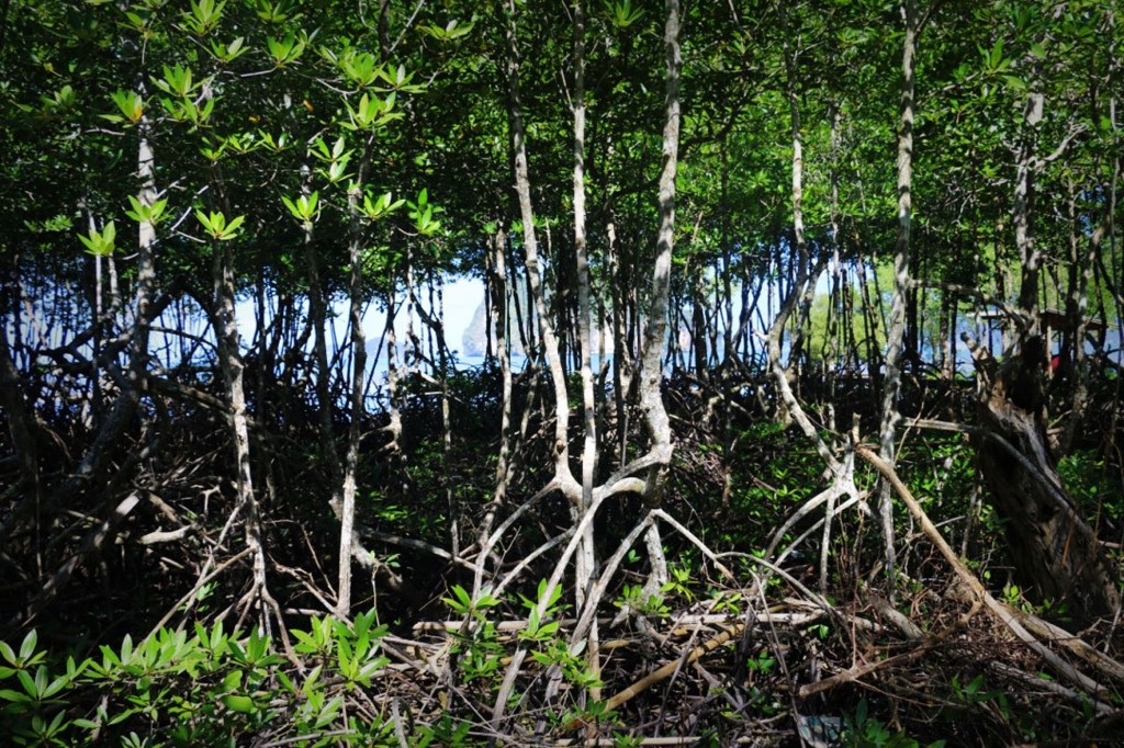 Tha-Lane-Bay-Mangrove-Sea-Background