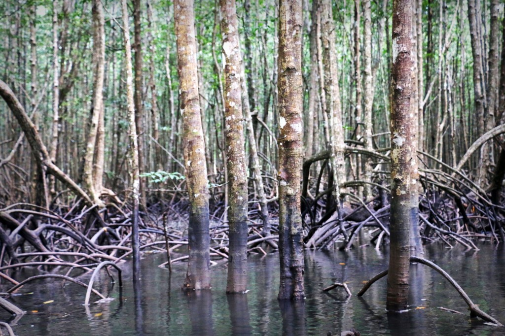 Tha-Lane-Bay-Mangroves