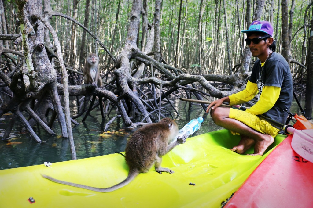 Tha-Lane-Bay-Monkey-Stealing-Water-on-Kayak